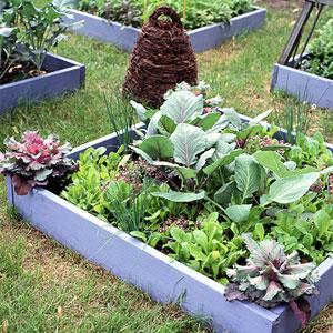 cool-season-veggies