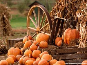 aumtumn-pumpkins-and-wagon